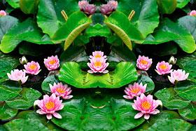 [Lotus pond]